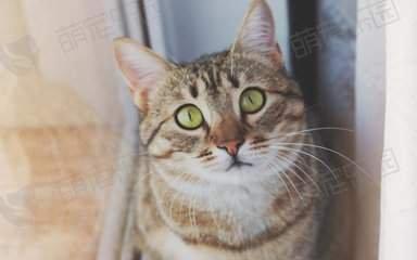 猫咪一直叫而且拉肚子怎么办?